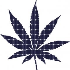Can Solar Power Help Marijuana Growers?