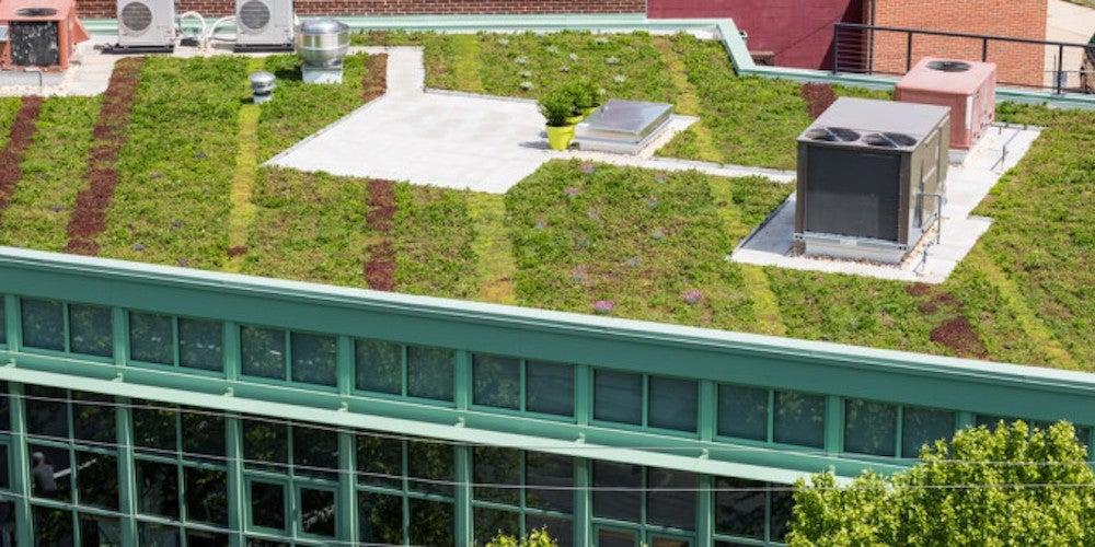 Green vegitation growing on a flat roof