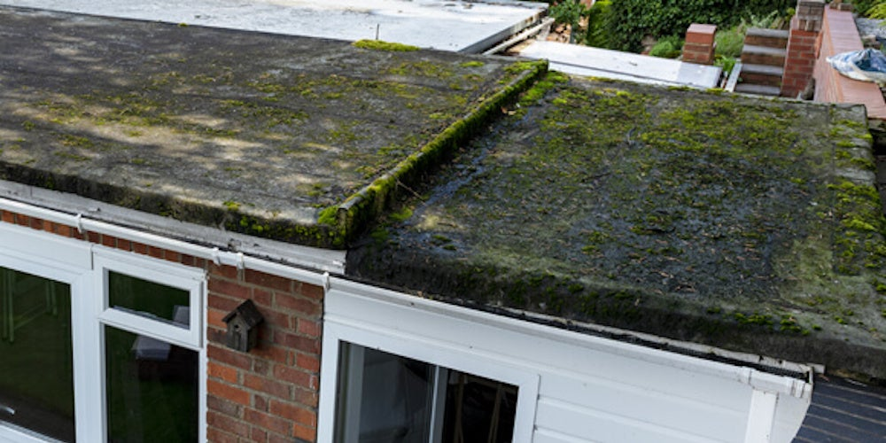 A flat roof covered with mold due to water damage