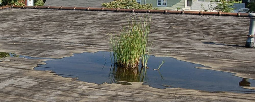 Flat roof with weeds