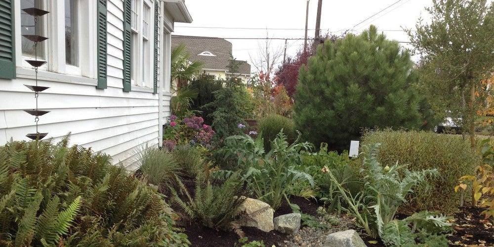 Rain chains in a garden