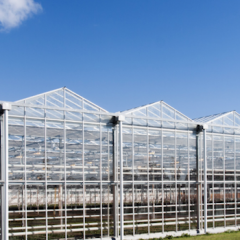 GH Farms Takes Agriculture Indoors With 5-Acre Solar-Powered Greenhouse