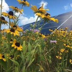 Organic Valley Farmers, Dr. Bronner's Go 100% Renewable with 31MWs of Community Solar